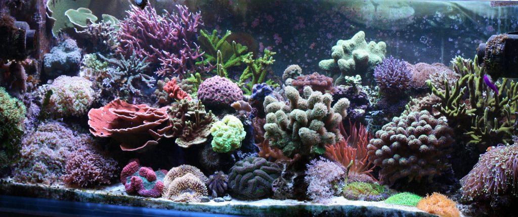A reef aquarium in detail.